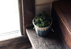 「やさい」が入った植木鉢