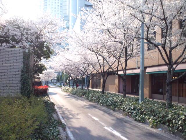 20120409桜3