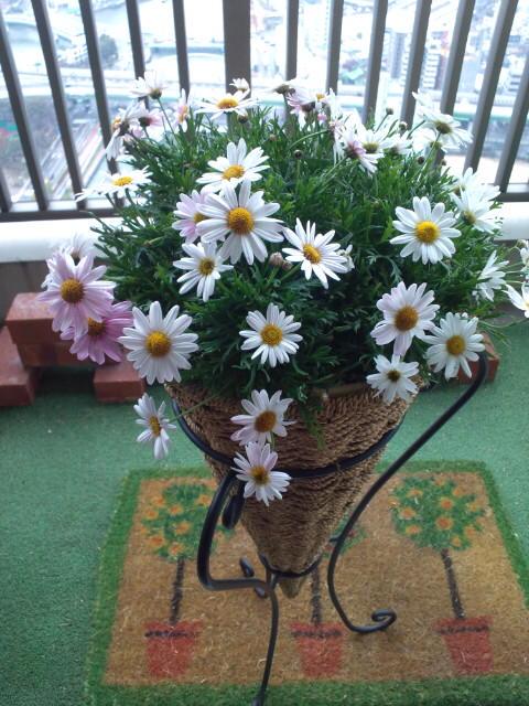20120409花