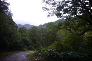 ブナ帯景色1