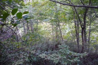 ブナ帯景色2