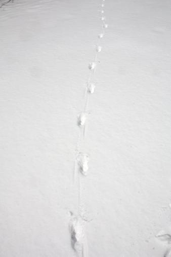 きつね足跡2