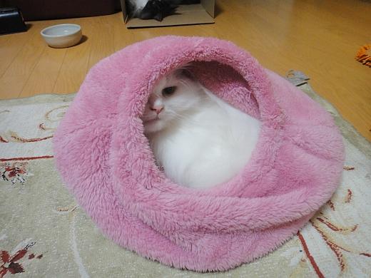 ピンクと白の