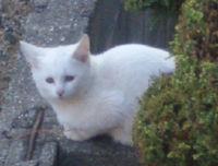 白猫ちゃん?