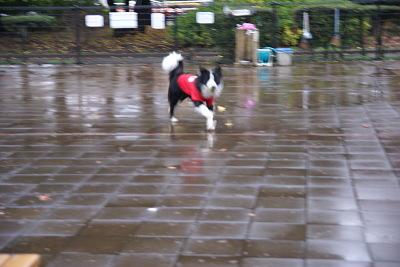 1211-5駒沢公園ドッグラン
