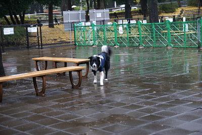 1211-4駒沢公園ドッグラン