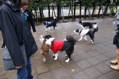 1212-11駒沢公園