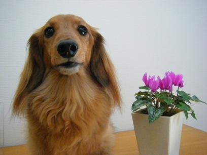お花は癒されるね~。桃のお鼻にも癒されるよ~(>m<)