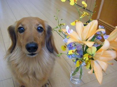 実はこのお花、お葬式で頂いてきたお花なのよ(^^;)