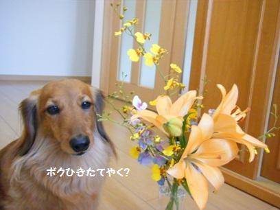 菊のお花もあったけど、菊は別の花瓶に。ソッチはいかにも「お葬式でもらいました」ってな感じで癒されない。