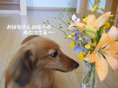 百合系のお花って花粉が着くと大変なんだよね。ニオイもちょっと苦手。
