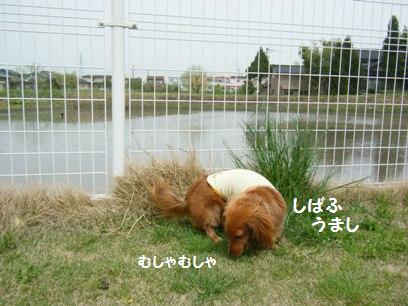 ワンコって何で芝生をサラダバーにするんだろうか?