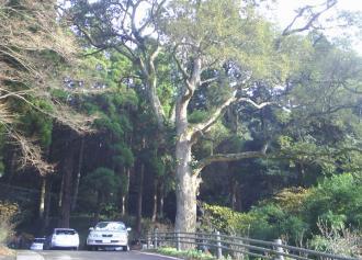 03 大きな木 b (36%)