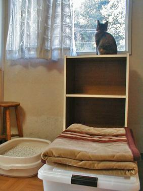 新しい家具②