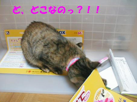 おもちゃ箱①