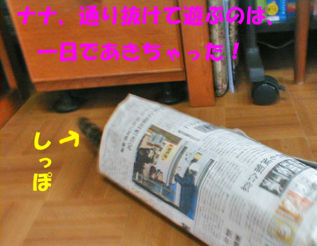 新聞紙トンネル①