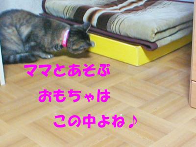 遊ぶの!①