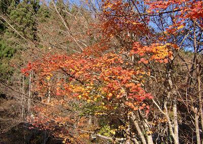 林道栗林線の紅葉