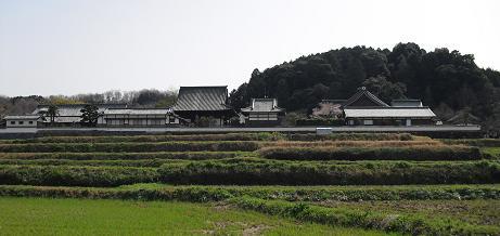 早春の橘寺