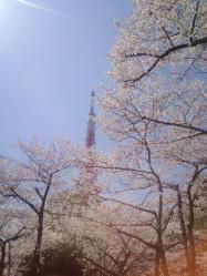 タワー桜&東京