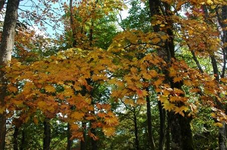惣岳山山頂の紅葉