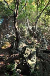 岩にしがみつくように生える木
