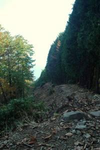 コブタカ山から杉ノ殿尾根を見下ろす