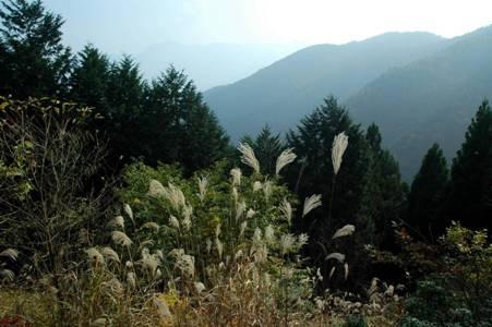 杉ノ殿尾根からの眺望