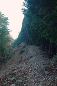 コブタカ山から杉ノ殿尾根へ