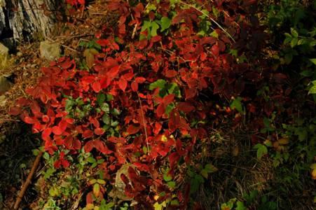 61_色鮮やかな紅葉