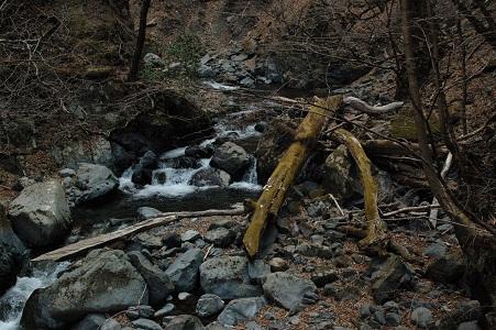 06_森の中の川
