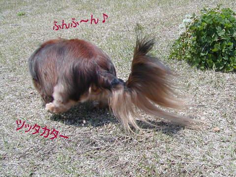 006_20110501224526.jpg