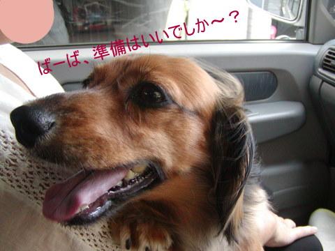 008_20110911171939.jpg