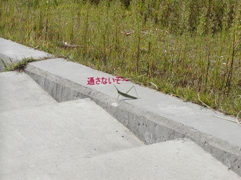 011_20111009172024.jpg