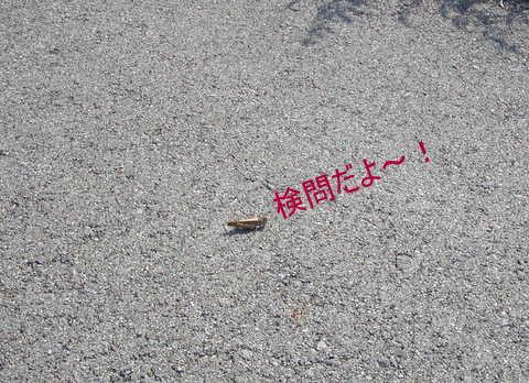 022_20111009174039.jpg