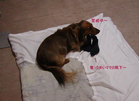 024_20110310221930.jpg
