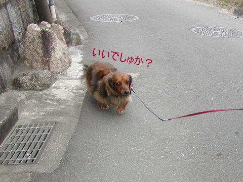 044_20110321230216.jpg