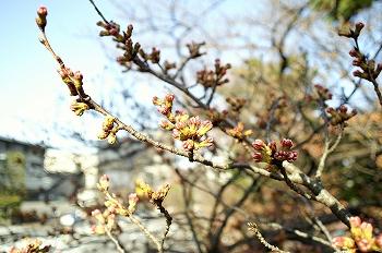 2010皇居東御苑&北の丸公園3