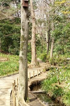 おとめ山公園2