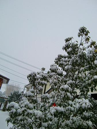 真っ白! 13.1.28