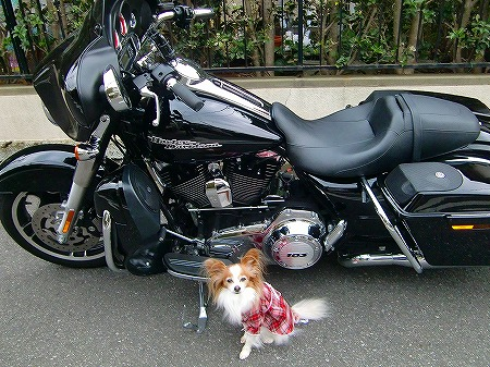 Harleyと一緒に~ 13.3.2