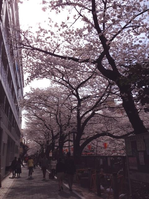 2013323sakura.jpg