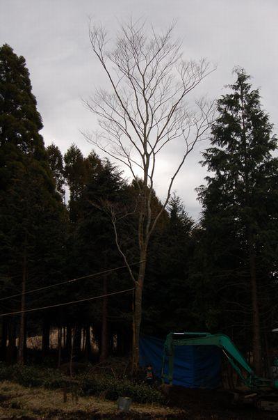moving tree 2