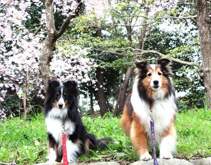 2012 4.13 家族でお花見 (39)