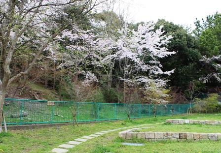 2012 4.13 家族でお花見 (6)