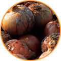 img-onion.jpg