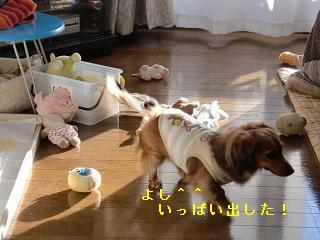 CIMG0156_20100125203342.jpg