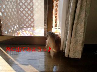 CIMG0208_20100221192107.jpg