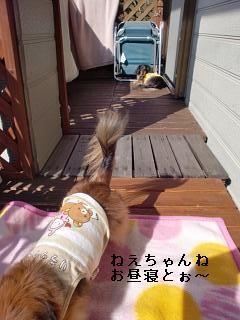 CIMG0209_20100221192135.jpg