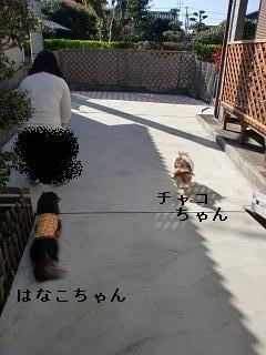 CIMG0329_20100321210301.jpg
